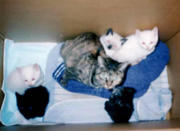 猫 5匹 生まれる